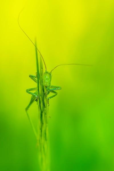 grasshopper (reedit 2)