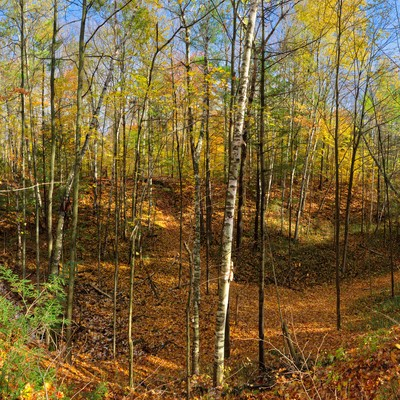 Autumn day panoramic stitching