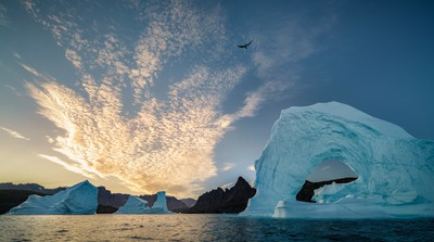 Free As A Bird In Greenland