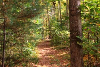 Hiking Trail at MMD Land Preserve II