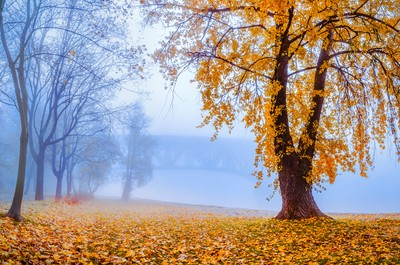 Foggy autumn morning on Vistula