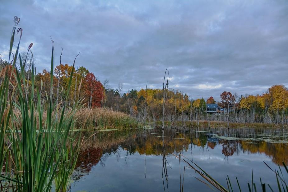 Meijer Gardens Swamp