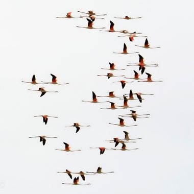 Flamingoes in the South of Spain