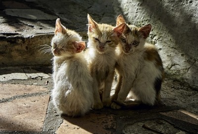 Church Kittens
