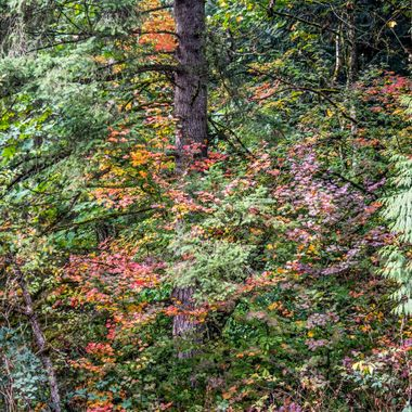 Woodland Fall