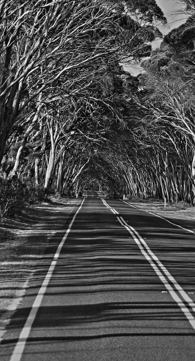 Route boisée ki