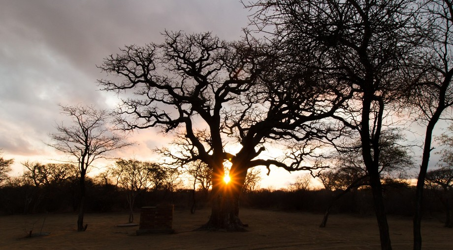 Sunset at the Khama Rhino Sanctuary, the huge trees created a magical experience with the sun gle...
