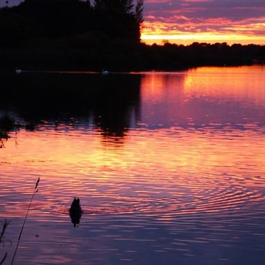 My local loch catching a lovely sunset with the local wildlife
