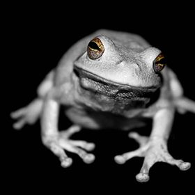 Frogs have beautiful eyes they just need a little help with color pop to see