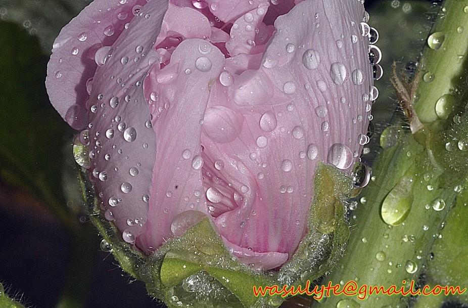 watery but beautiful
