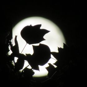 This photo was taken from my yard on the first Fall day of this year. The leaf shadows added character to the full moon.