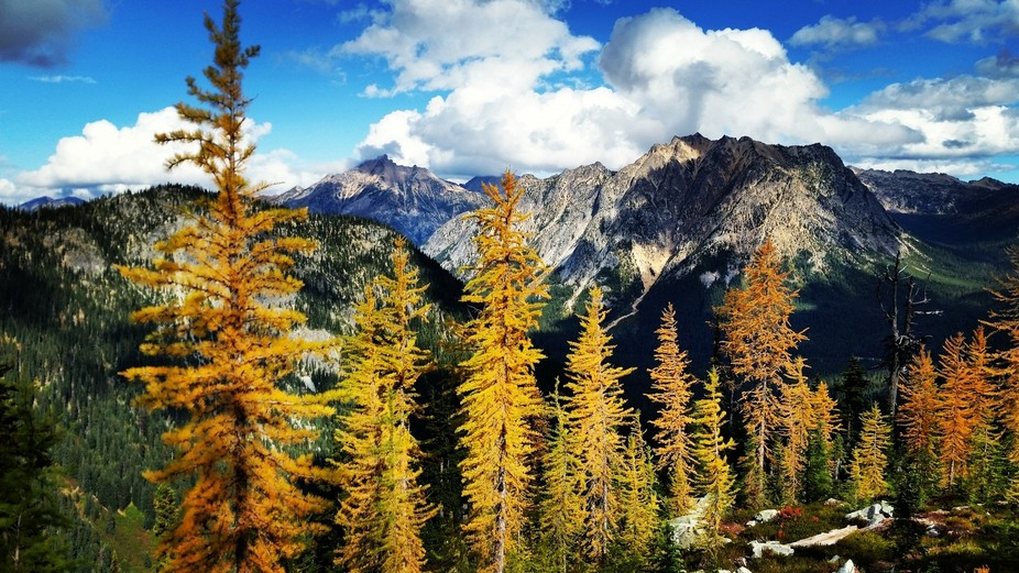 Hiking in the fall, met some colorful larch trees. they spoke to me.