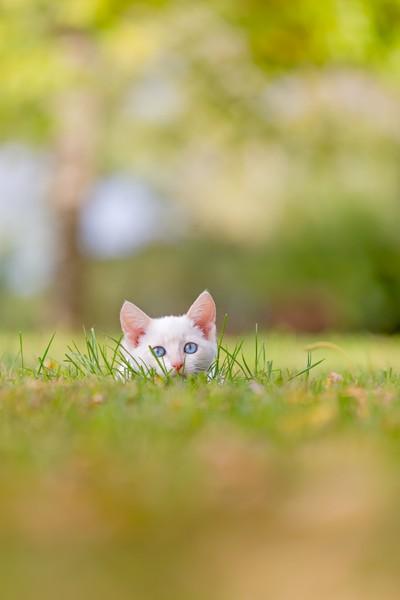~ Sneaking ~