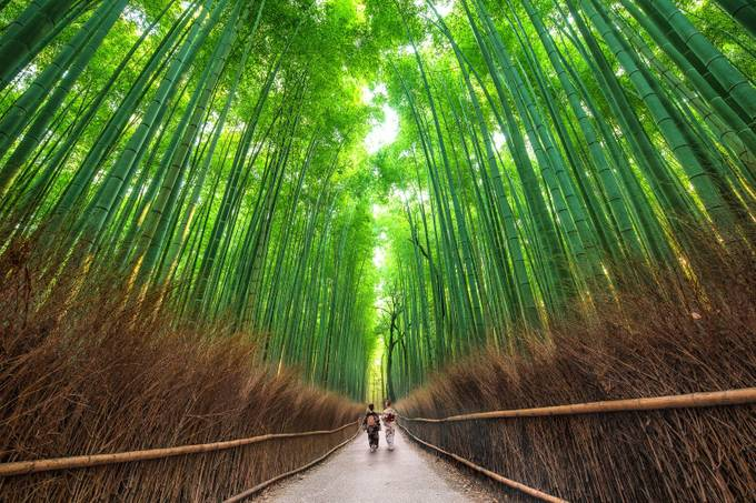 Sagano Path by sventaubert - Cultures of the World Photo Contest