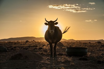 ox_sunset_2015_sarel_photowise