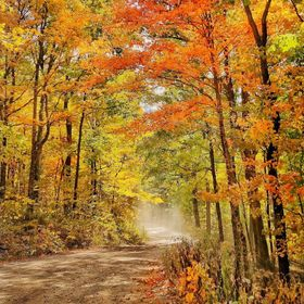 I took this picture a few weeks ago driving up hinch mountain in eastern Tennessee. The leaves were I'm full autumnal glory