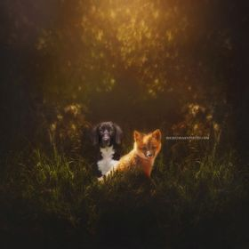 a composite image with one of the puppies I fostered  fox overlay:captured by carrie