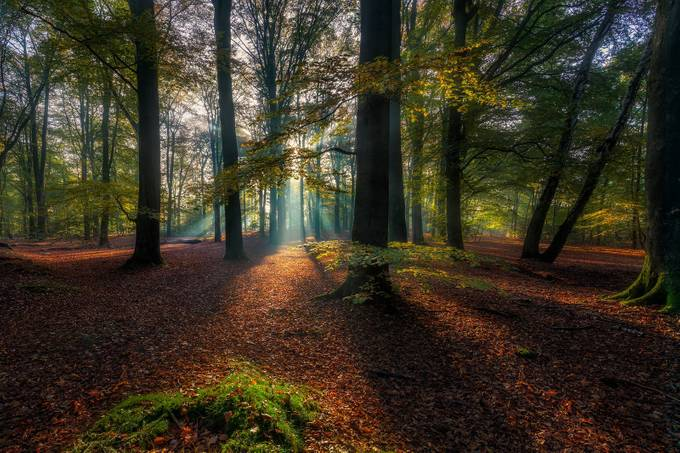 Dutch autumn by DennisartPhotography - Fall 2017 Photo Contest
