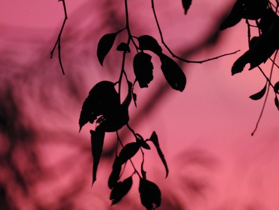 Love this silhouette shot with pink background