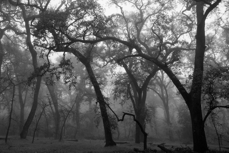 DSC09925  Trees Awakening