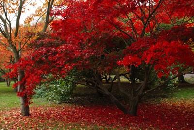 DSC_0047 Autumn in Bute Park 8