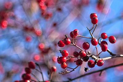 Autumn is berry time :-)
