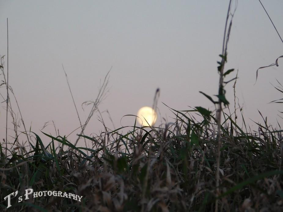 Full moon in the Field