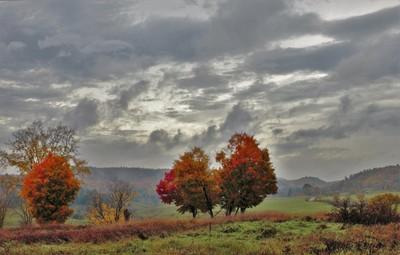 Fall after rain IMG_5962