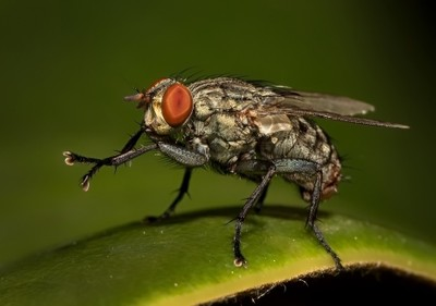 A Fly Up Close