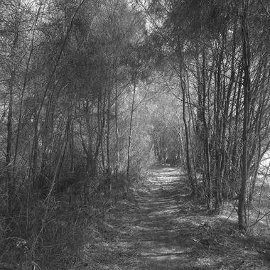 Wallaga walk