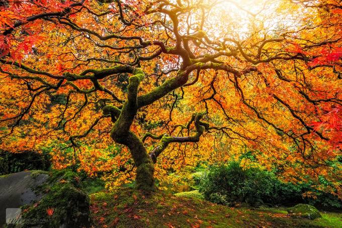 Fall's Enchantment by WendyHudnall - Monthly Pro Vol 27 Photo Contest