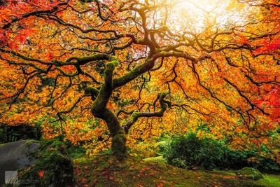 Fall's Enchantment