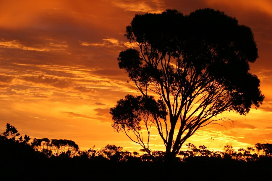 While driving through the Nullarbor i caught this beautiful sunset.