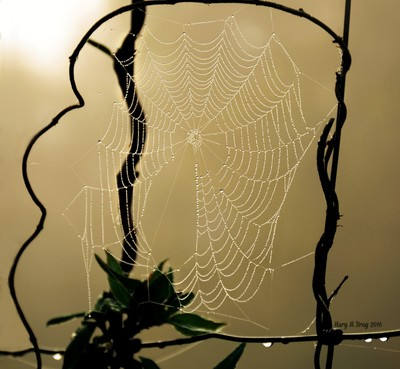 Dew Covered Web