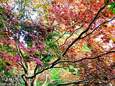 Autumn,lakes uk