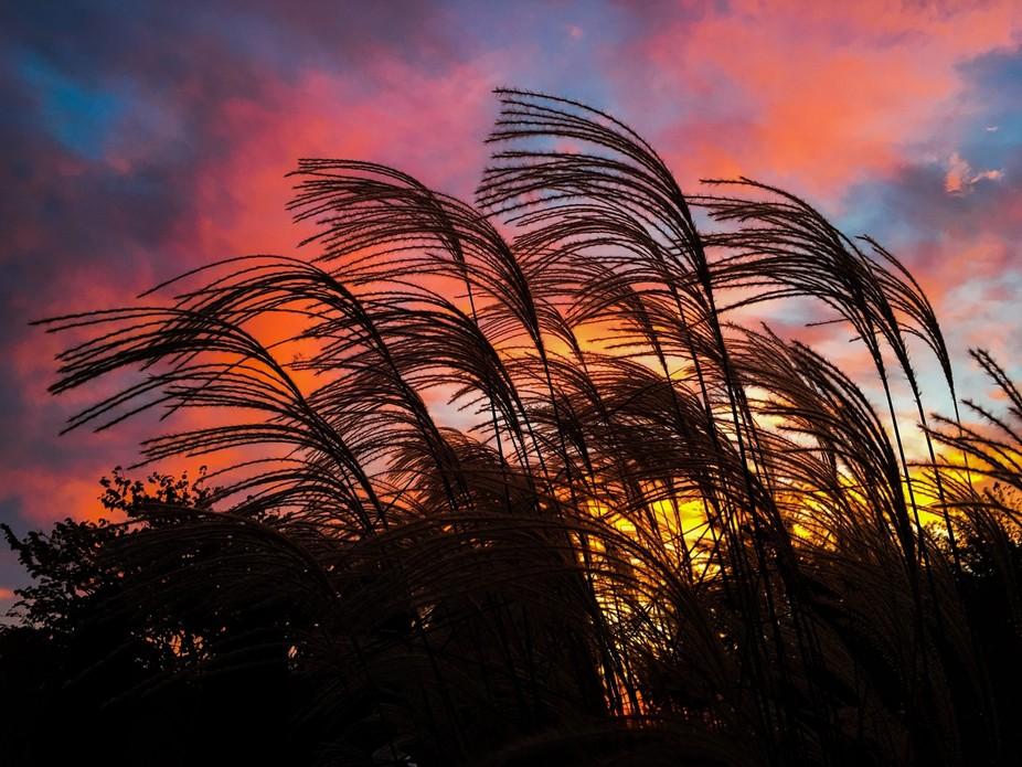 Oct sunrise