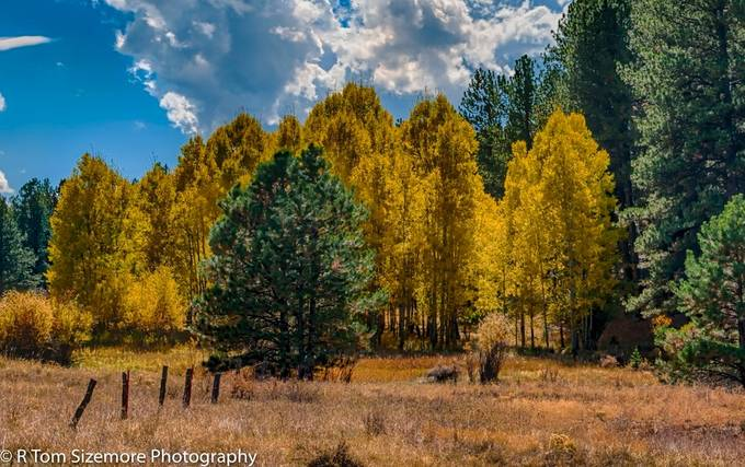 Driving west from Colorado Springs, I found this beautiful field.  The pine tree seemed to stand out from the yellowing leaves so well, I just had to capture it!