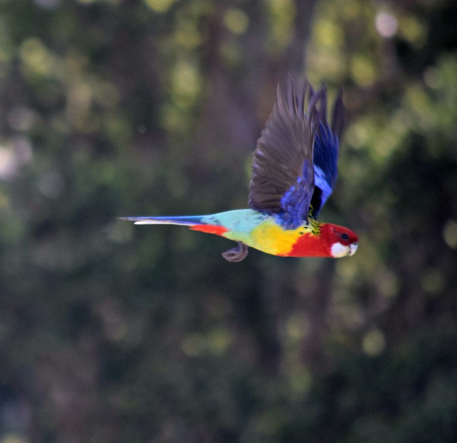 Taken today during my stay in Lake MacQuarie Australia