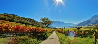 Bolzano - Vignetti sopra Lago Caldaro