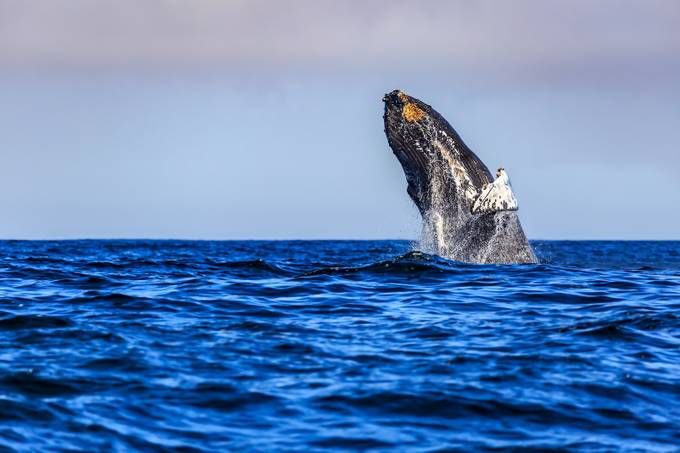 Leap by patrick9x9 - Wildlife Photo Contest 2017