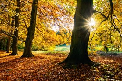 Autumn Evening in Saxony