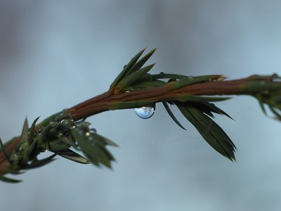 Reflections in water drop