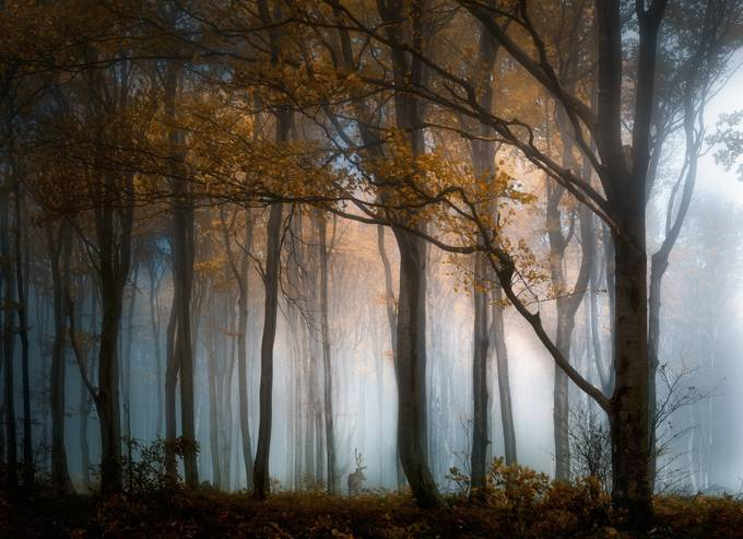 Autumn mood by swqaz - Composing with Patterns Photo Contest