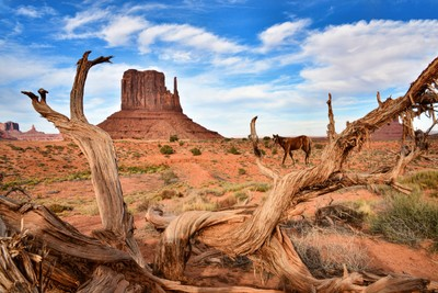 Twisted Wood and Red Rocks