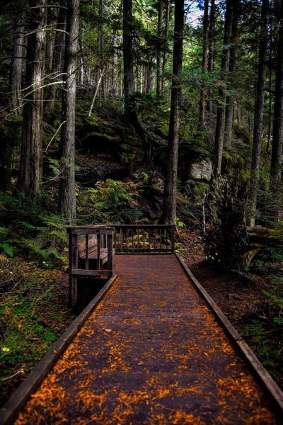 Wooden Bench Walkway