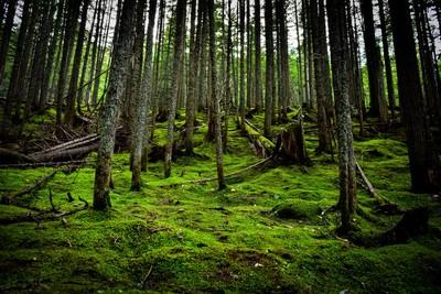 Moss Trail - Glacier National Park