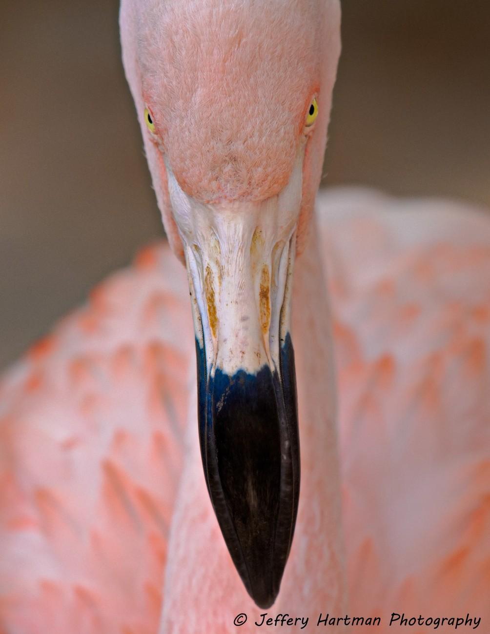 Gulf Breeze Zoo, Gulf Breeze, Florida