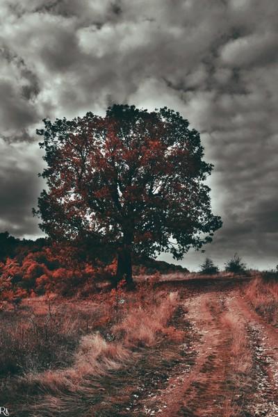 Landscape (1) @landscapescollection3