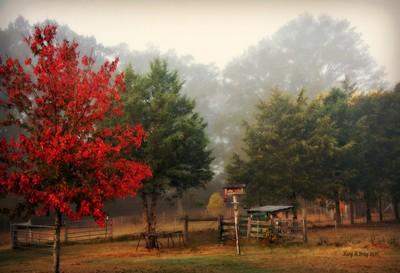 Foggy Nov. Morning