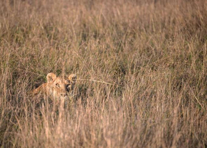 Hiding by kbhasker - Can You See Me Photo Contest